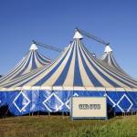 Zakaz wstępu dla cyrków ze zwierzętami